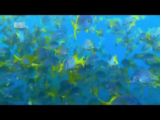Чудеса голубой планеты Южная Америка xeltcf ujke jq gkfytns yfz fvthbrf