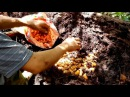 VN - Daily Horror. Hunting Red palm weevil, sago worm for food. Village food Part2