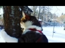 Где-то в Финляндии, 17.02.2018 (Видео от Juska Salminen)