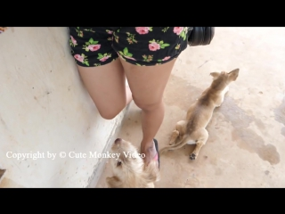 Cute girl give food to small dog at home beautiful girl playing with puppies in the room part.5