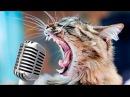 Коты поют Avicil wake me up.Кошки поют авичи.Поющие коты смешное видео.Смешные коты и кошки 2018