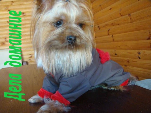 Как сделать выкройку комбинезона для маленькой собаки своими руками Выкройка канал Дела домашние