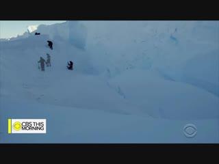 BBC documentary crew makes rare decision to intervene and help baby penguins