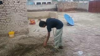 Sarso Ky Beej Ghar Mai Asani Se Kese Nikalty Hain    Murtaza Veer Village Vlog