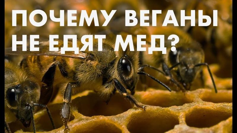 Почему веганы не едят мед? Правда о меде