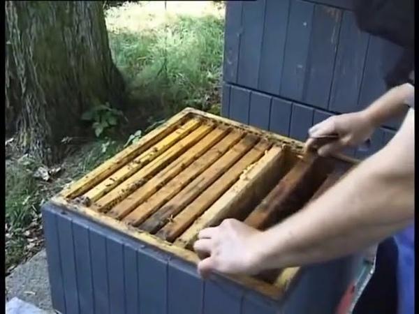 Многокорпусное пчеловодство в Чехии смотреть онлайн без регистрации