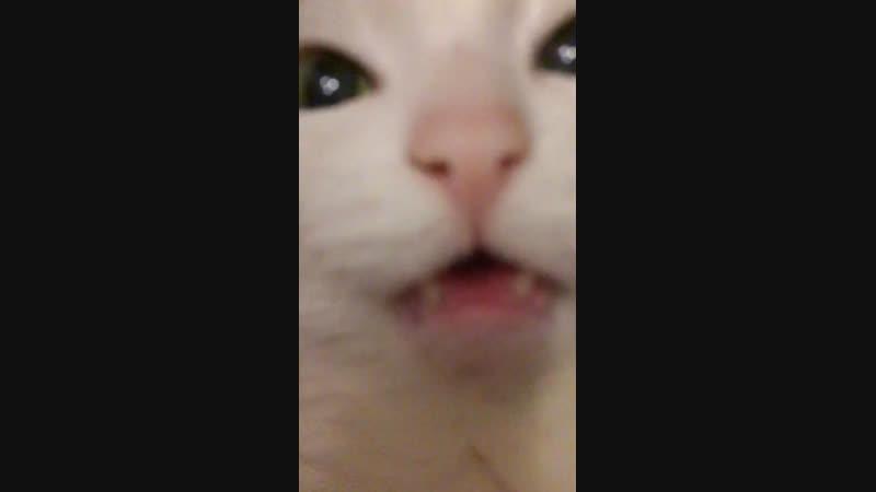 Кошька адский s*ех