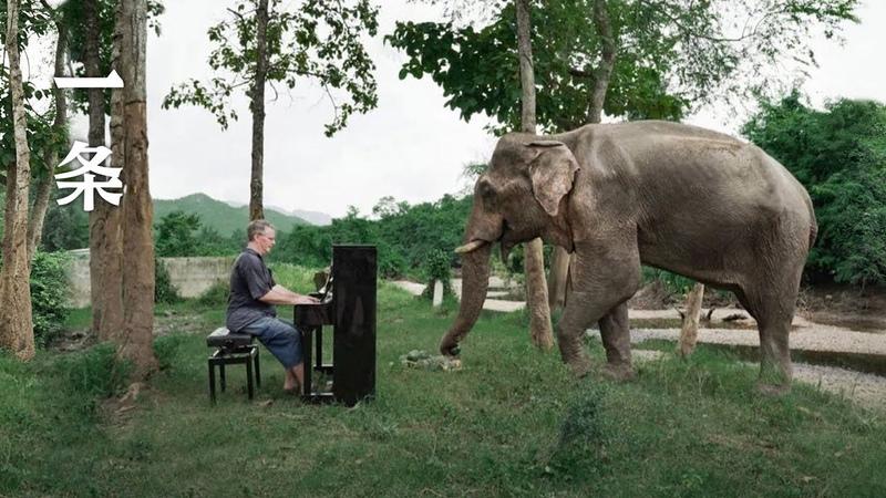 他為大象彈鋼琴8年:替人類還債 He Played the Piano to Elephants for 8 Years: Paying Human's Debt