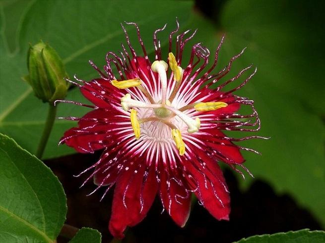 Лучшие вьющиеся растения