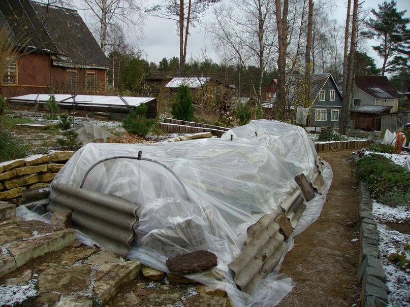 Общее укрытие розария плёнкой и укрепление укрытия
