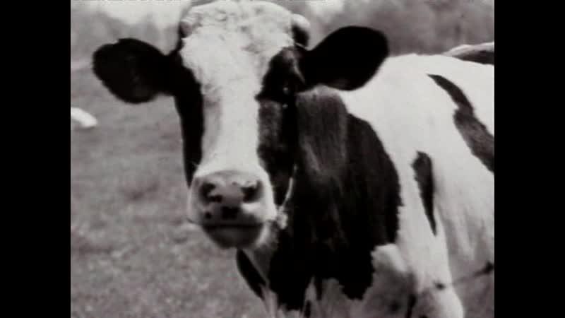 Джаз история джаза д ф 2000г реж Кен Бёрнс Фильм 9 Риск 1945 1949 Чари Паркер сыграл озадаченной корове