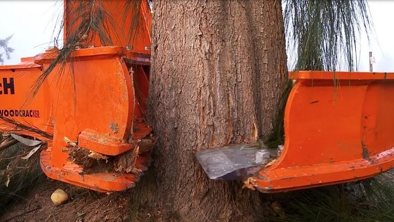 Amazing Modern Fastest Skill Long Reach Excavator Cutting Big Tree Machine Working