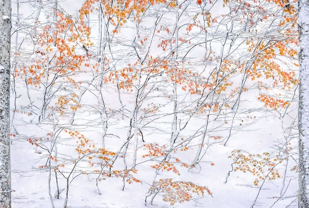 Встреча осени и зимы