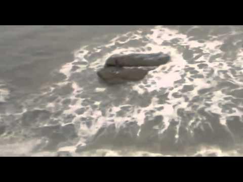 ערוץ Animal Planet העולמי בתולת ים בקרית ים