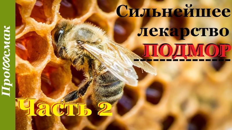 Сильнейшее лекарство пчелиный подмор Приготовление использование