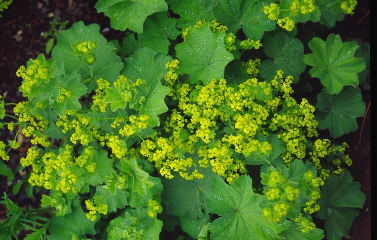 20 трав от всех недугов: какие травы пить, чтобы не болеть