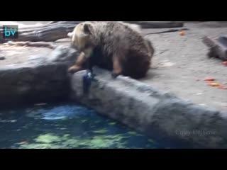 То как животные помогают друг другу в беде