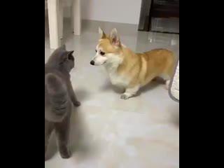 Extrovert trying to befriend introvert
