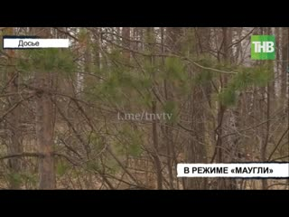 С двумя детьми убежала в лес жительница Лениногорска - ТНВ