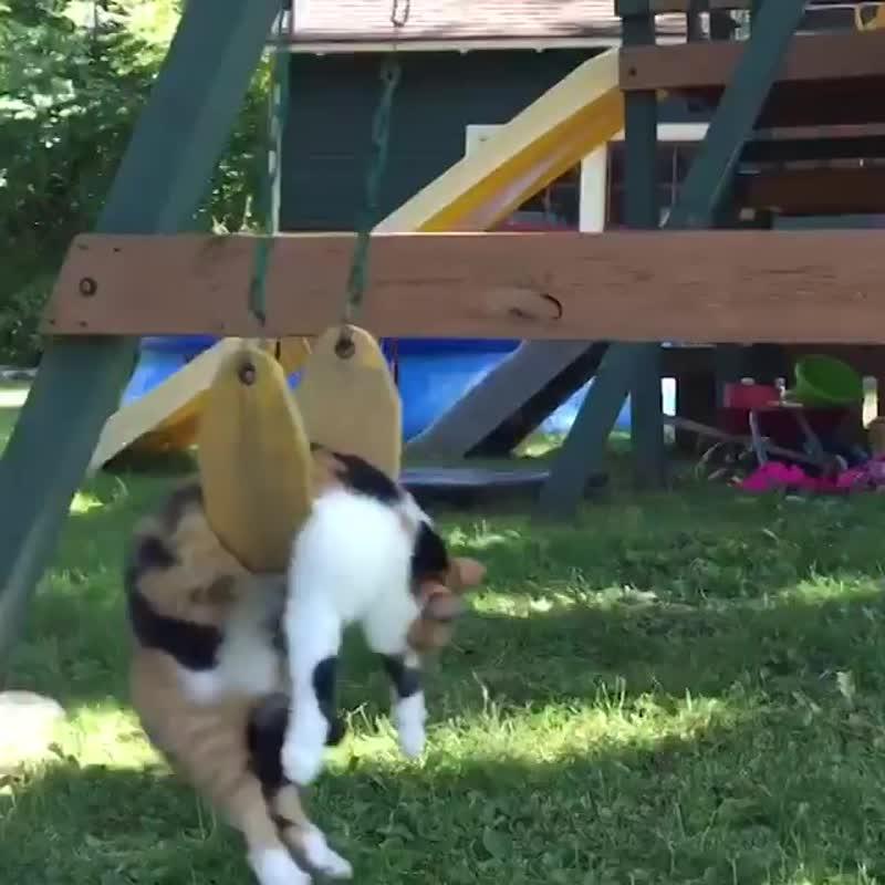 Эти забавные трёхцветные кошки.