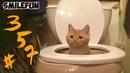 КОШКИ 2020 Смешные коты и кошки Приколы с Котами и Кошками Funny Cats