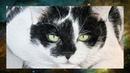 Tutorial Fell einer Katze I Semmy´s Art
