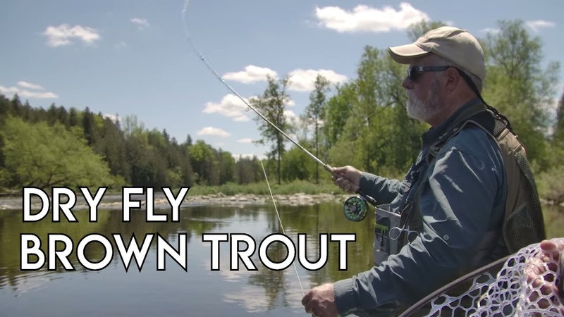 Dry Fly Brown Trout | Grand River