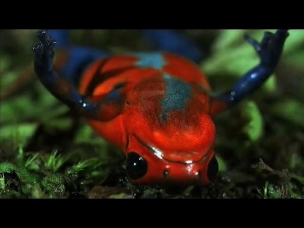 Яд Достижение эволюции Poison an evolutionary mystery 2015 Эпизод 1