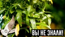 Полейте растения этим средством и они оживут через пару дней!