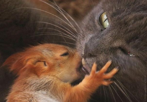 В Крыму кошка Пуша стала мамой для 4 бельчат. История от 31ноября2019Произошла эта история в парке миниатюр Бахчисарая. Там жила семья белок. Мама-бельчиха родила и воспитывала четырёх