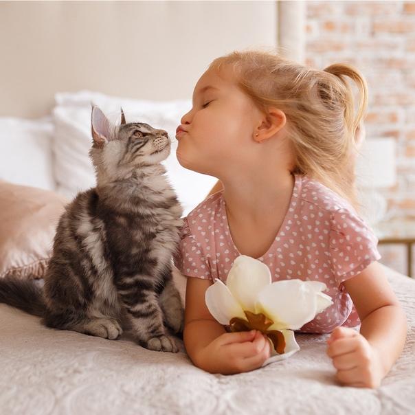 картинки кошки и малыши однополыми цветками