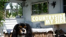 Dog at Countryside House | Cavalier King Charles Spaniel
