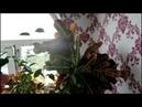 Обрабатываю комнатные растения от паутинного клеща. Комнатные цветы. Валентина Земскова