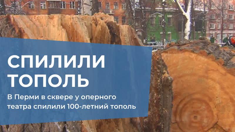 В Перми в сквере у оперного театра спилили 100-летний тополь