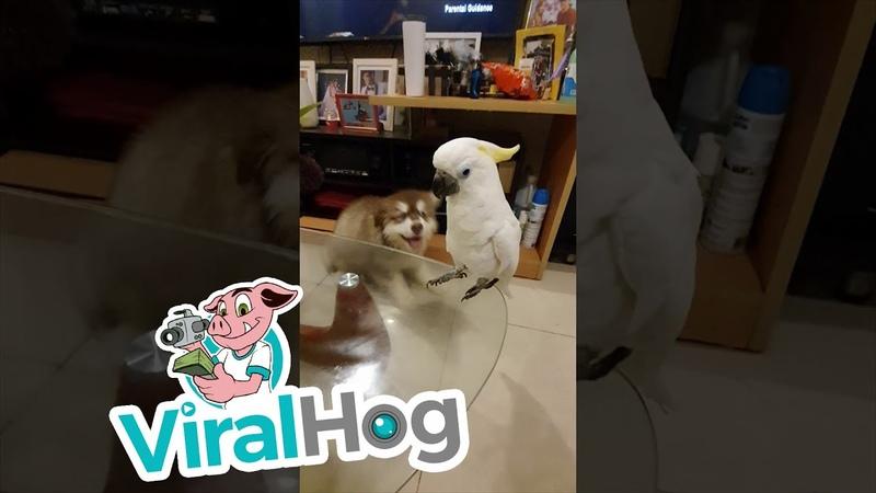 Barking Bird Confounds Canines ViralHog
