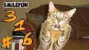 КОШКИ 2020 Смешные коты приколы с котами Смешные кошки Funny Cats 2020