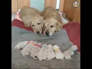Maman veille