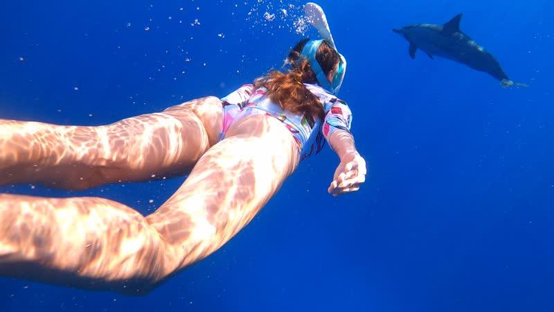 Дельфины киты и люди