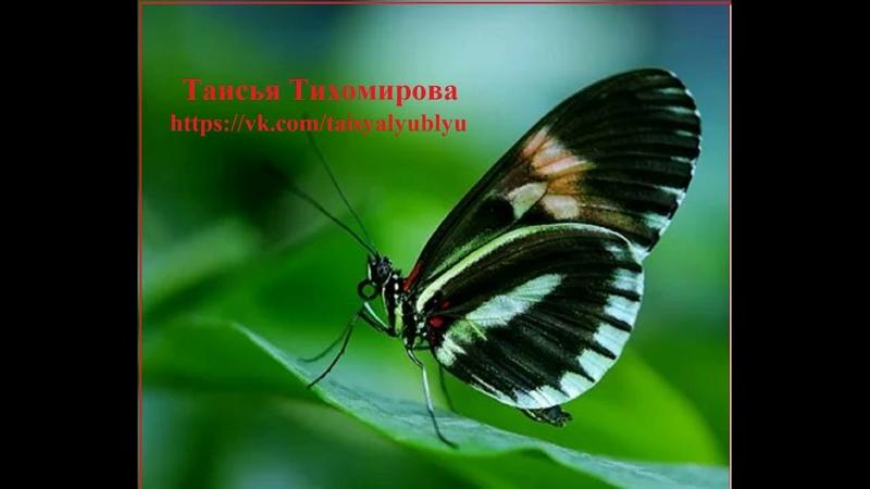 Рукки Вверх в Архангельске