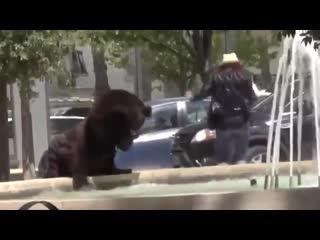 Одел костюм медведя и тут...