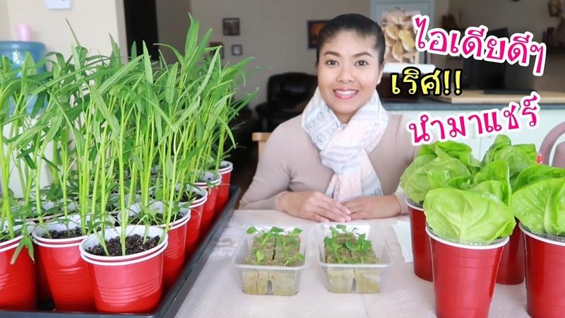 ทำแก้วปลูกผักในคอนโด ปลูกผักบนระเบียง