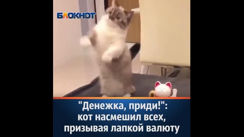 Денежка приди кот насмешил всех призывая лапкой валюту