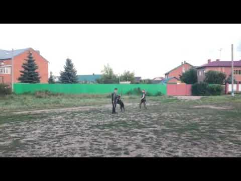 Appel Di Fortuna Karpe Diem ( El Diablo v. Havelland x Kro*Kett Fortuna Semper) г. Н. Новгород - Самара