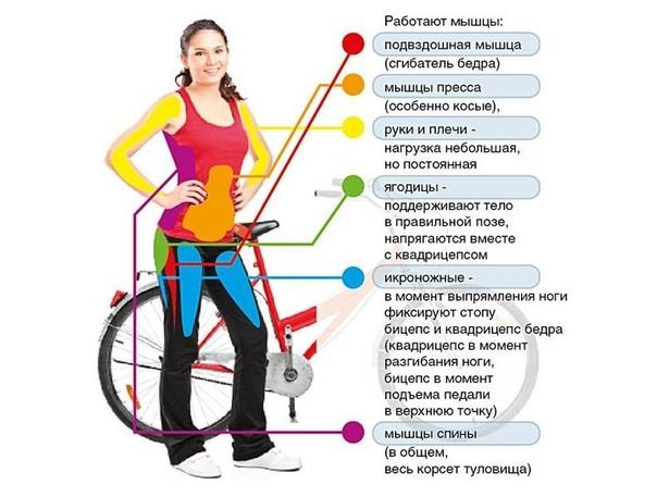 Сколько Нужно Велотренажер Чтобы Похудеть. Тренировки на велотренажёре каждый день