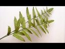 ABC TV How To Make Fern Leaves Paper Craft Tutorial