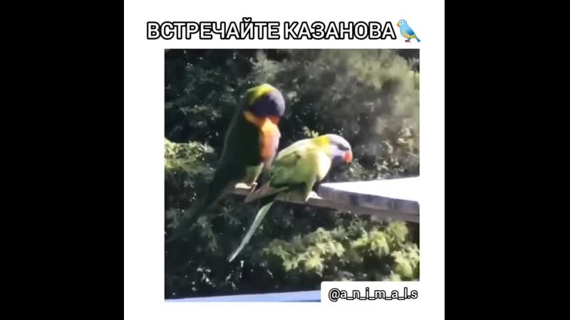 VIDEO-2019-11-18-21-05-36.mp4