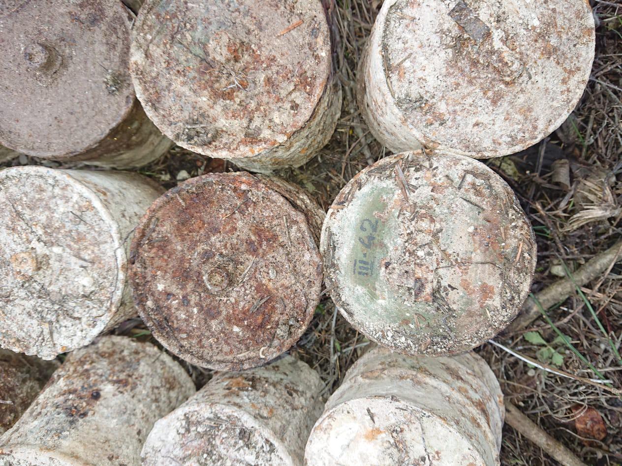 В лесу под Севастополем грибники нашли два десятка боеприпасов