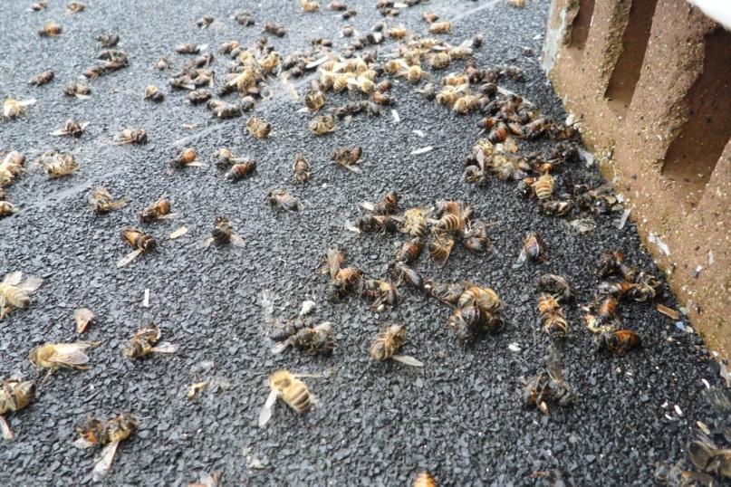 Погибшие пчелы / ©www.go68.ru