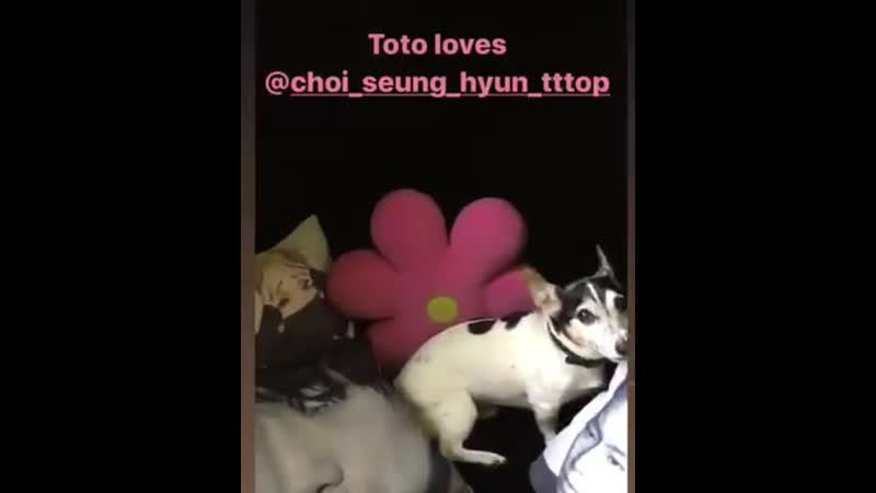Toto is me (1).mp4