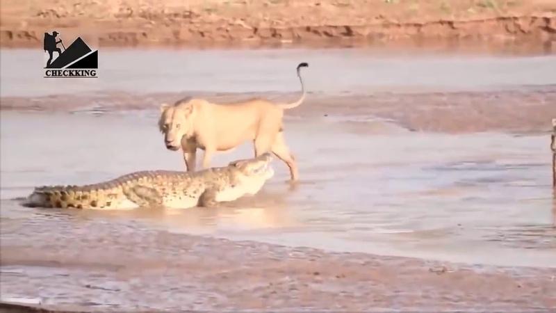 Самые шокирующие моменты в животном мире,за выживание